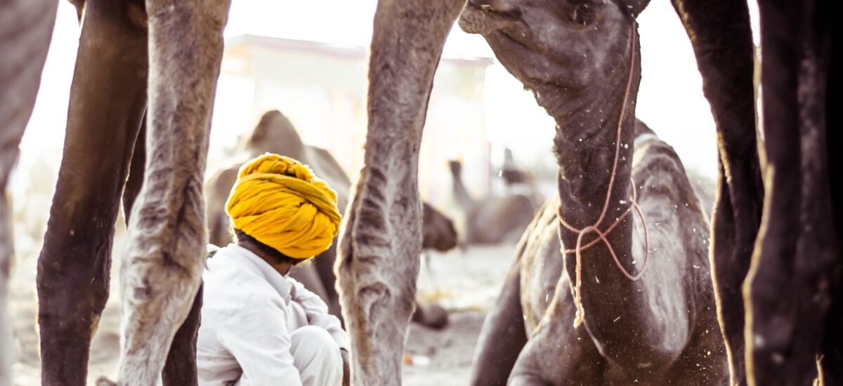Crafts, Culture, Camels and the Charkha